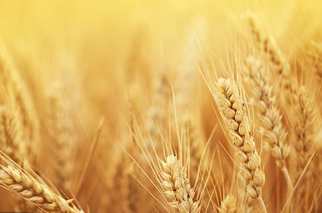 农业大数据:浙江省农业发展情况分析
